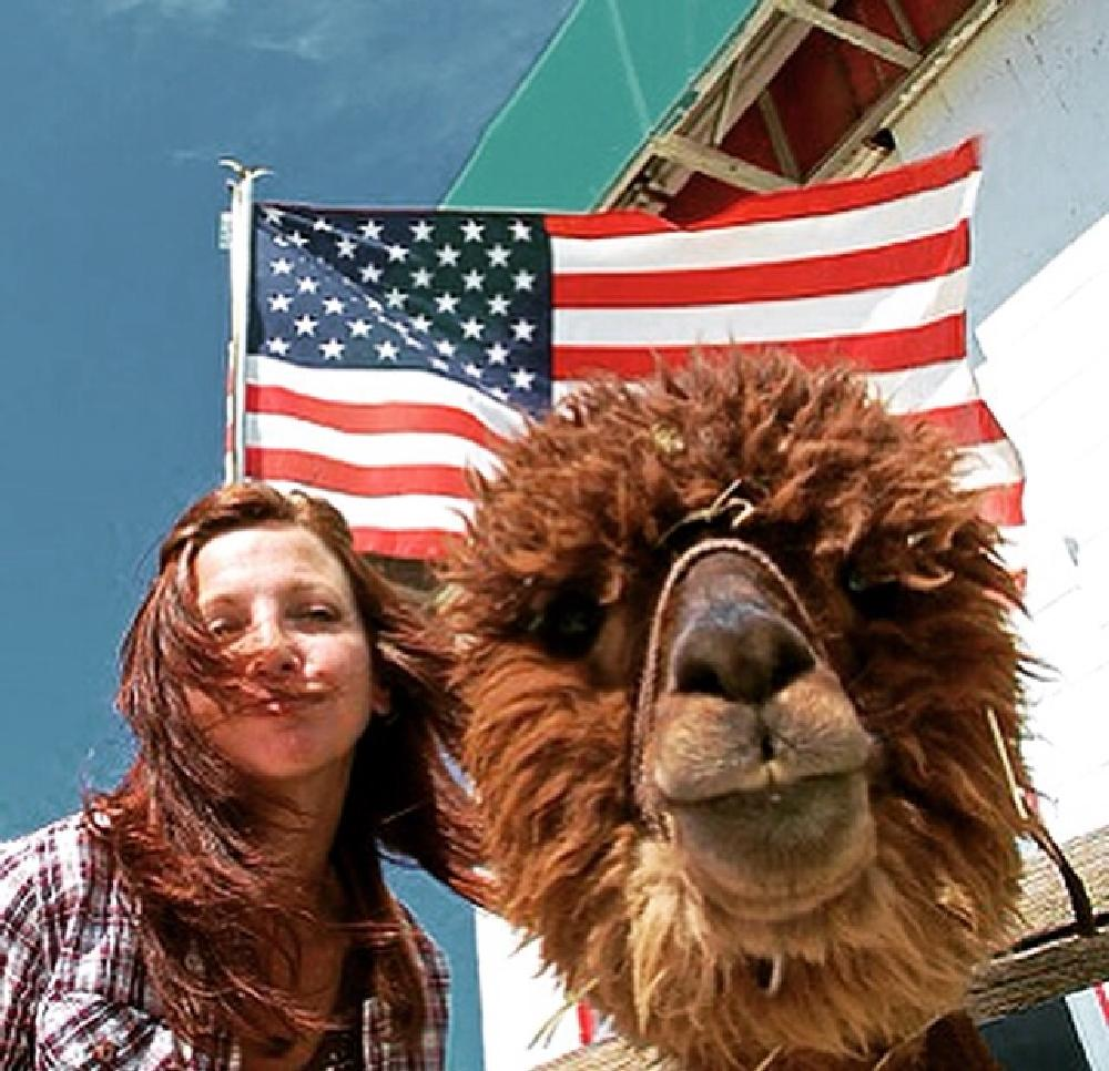 Photo in People #alpaca #lama #road