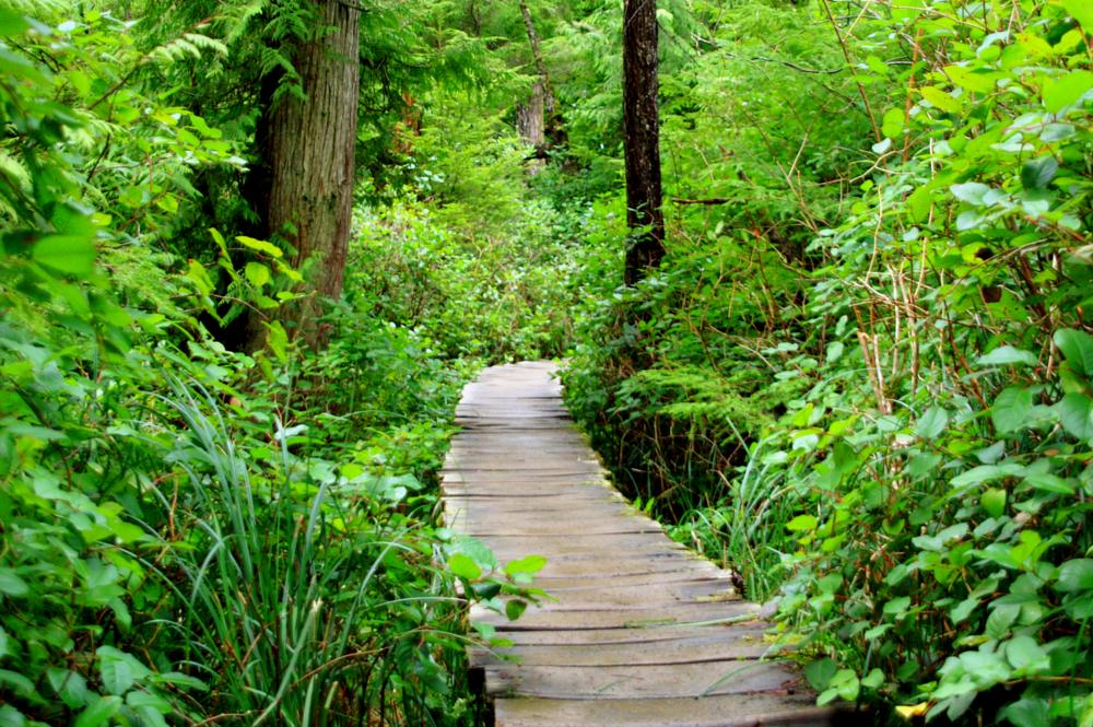 Photo in Landscape #journey #woods #path #nature