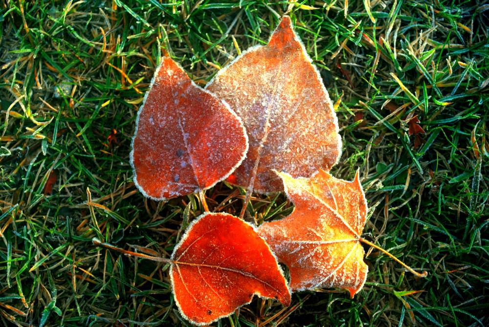 Photo in Landscape #leaves #fall #frost #seasons