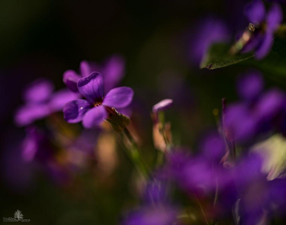 Photo in Macro #plants #nature #colour
