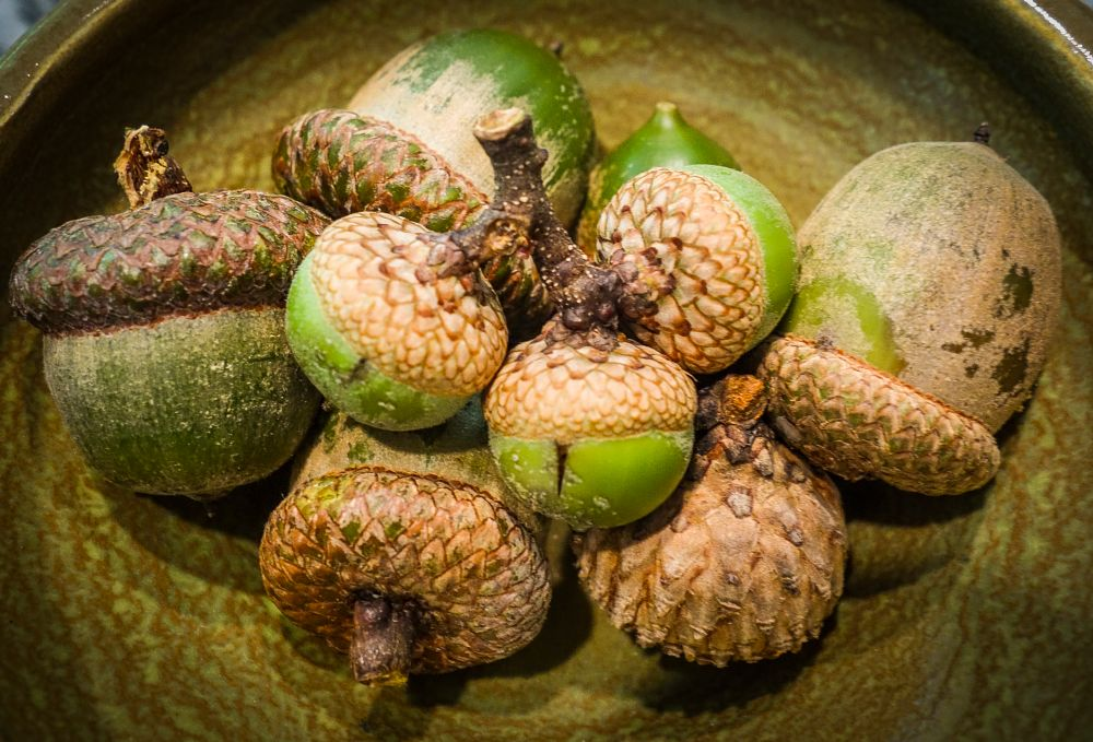 Photo in Still Life #acorns #acorn #color #still life #nature #trees #new jersey #vegetable #seed