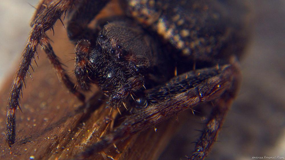 Photo in Macro #macro #photography #close up #near #spider #nature #hobby #nikon #insect