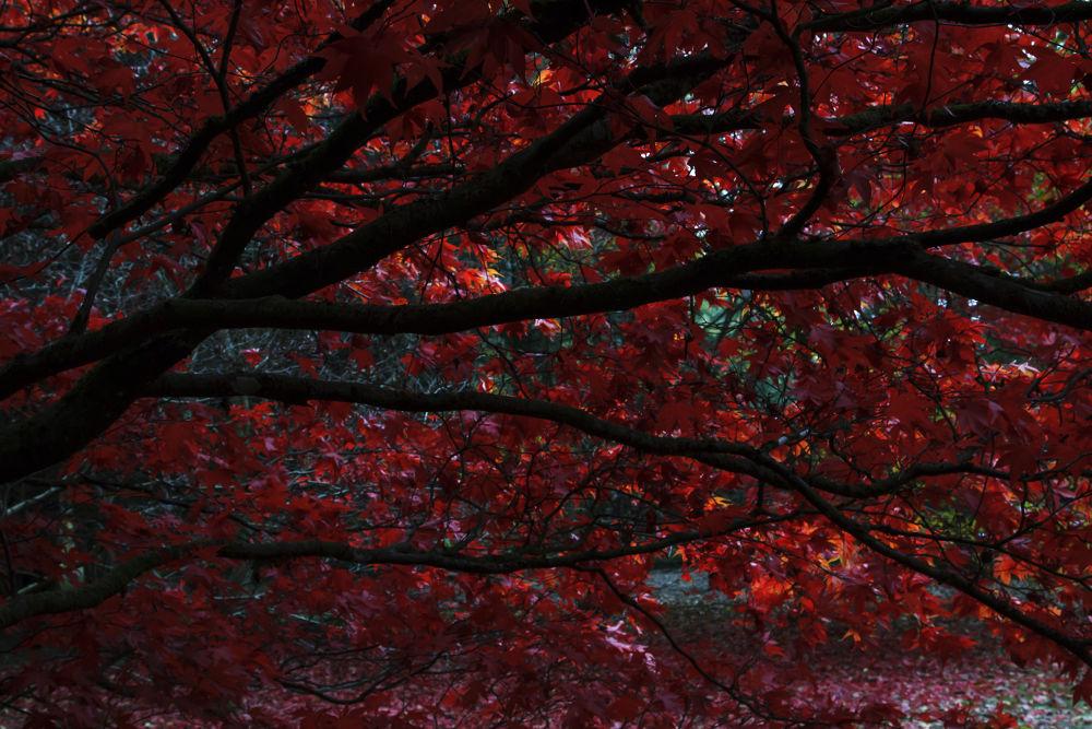 Photo in Random #shane #kerry #shanekerry #shane kerry #photography #autumn #tree's