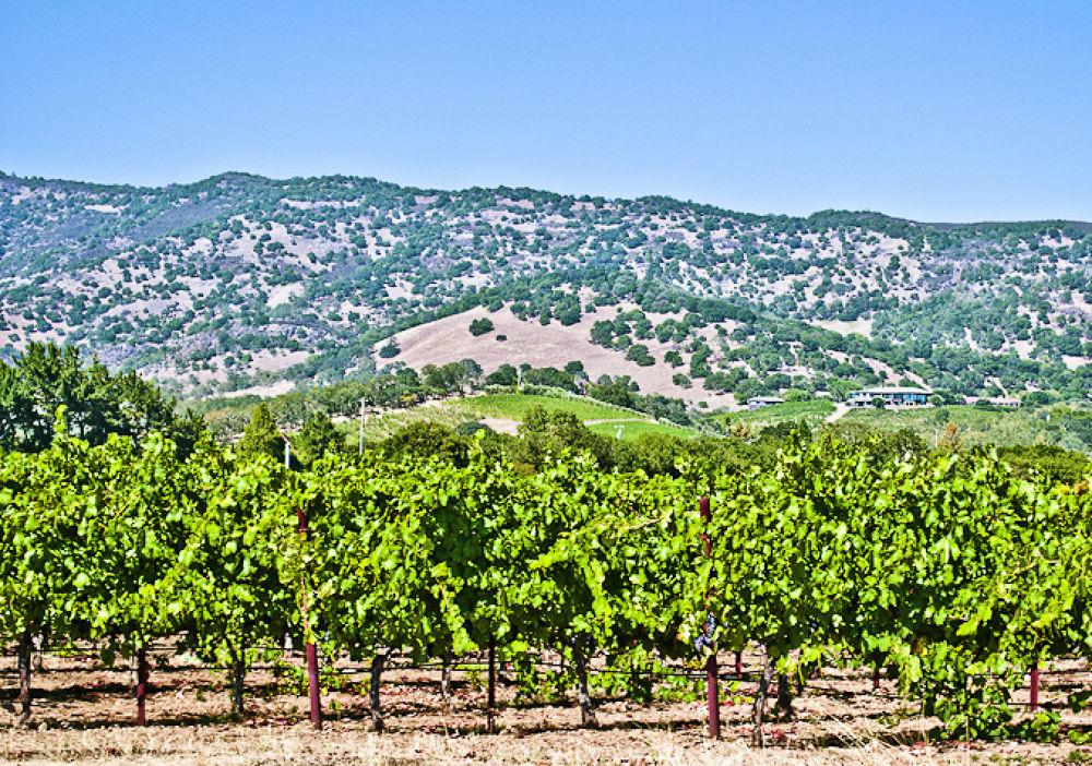 Photo in Random #napavalley #california #winecountry