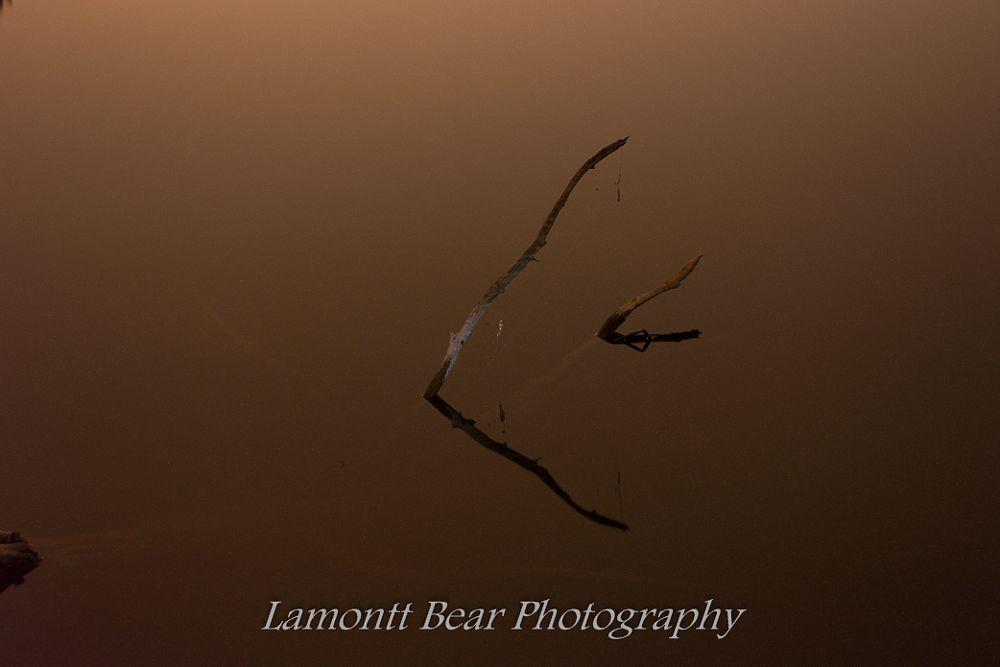 Photo in Landscape #lures #fishing #tree #mt.scott