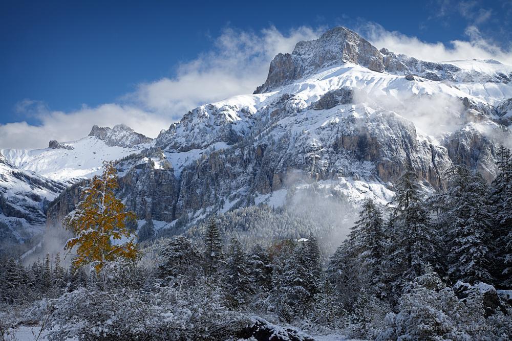 Photo in Landscape #tree #autumn #snow #mountains