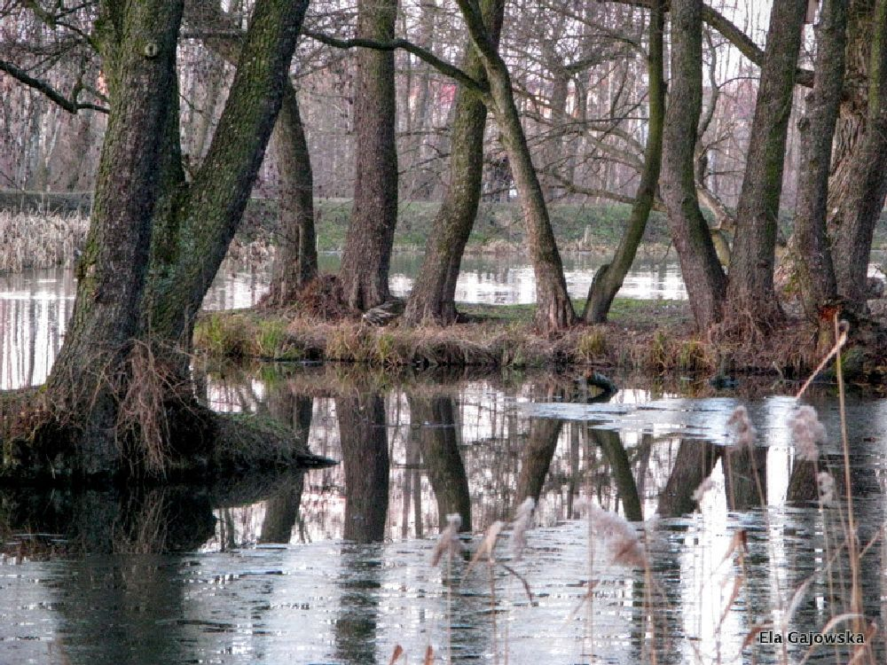 Photo in Nature #tree #water #pond #icy #reflection #park