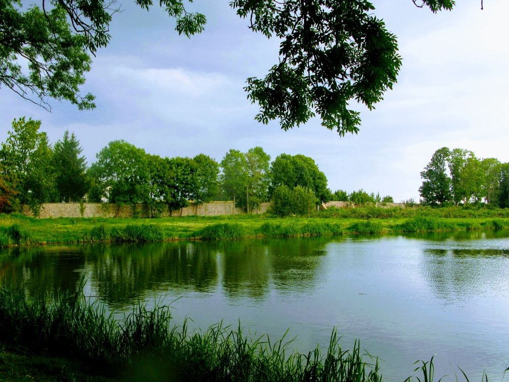 Photo in Landscape #pond #reflection #summer #trees #branch #grass