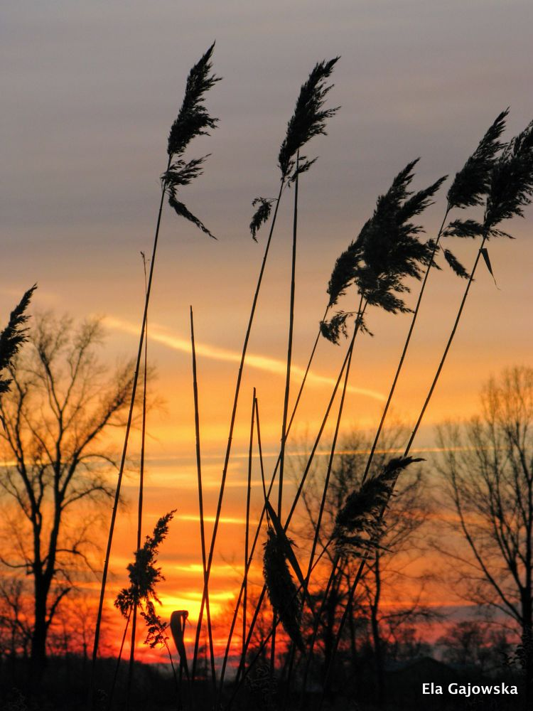 Photo in Nature #sunset #grass #countryside