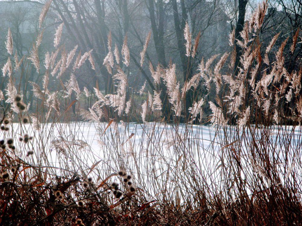 Photo in Nature #grass #lake #winter #january