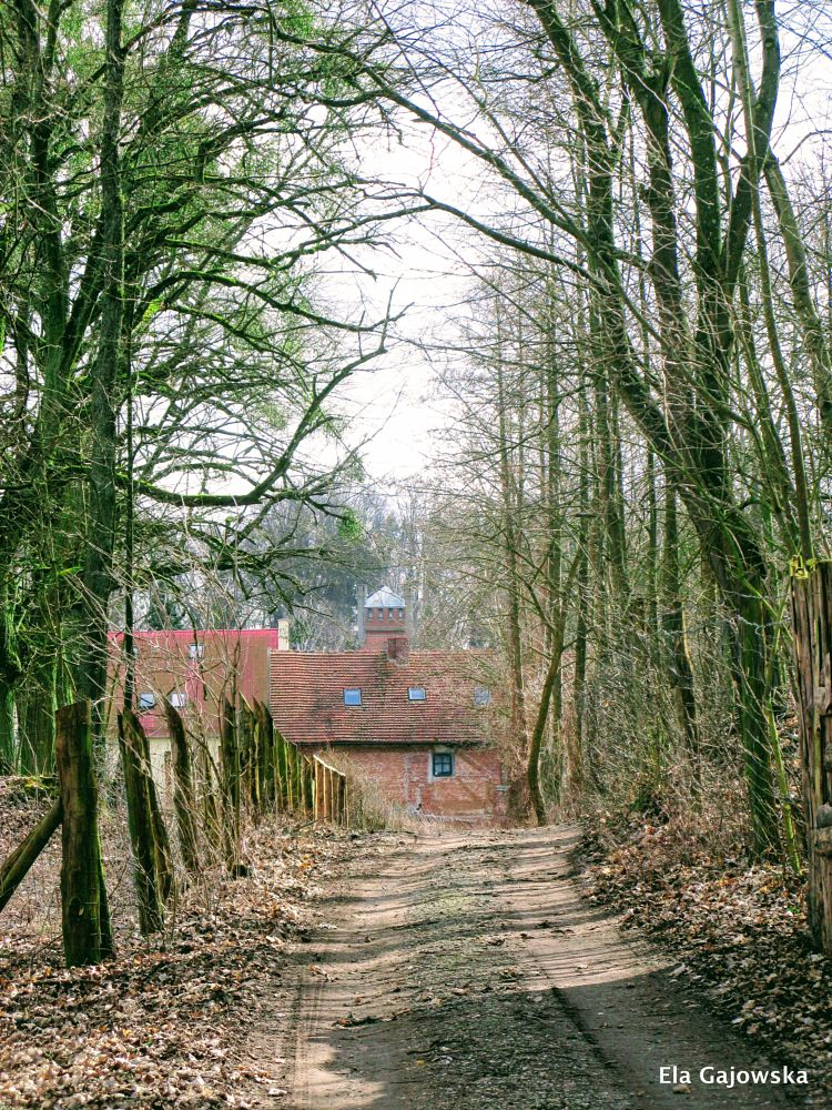 Photo in Rural #dirt road #house #fence #trees