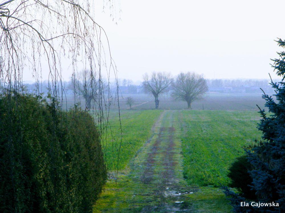 Photo in Landscape #countryside #field #mist #tree