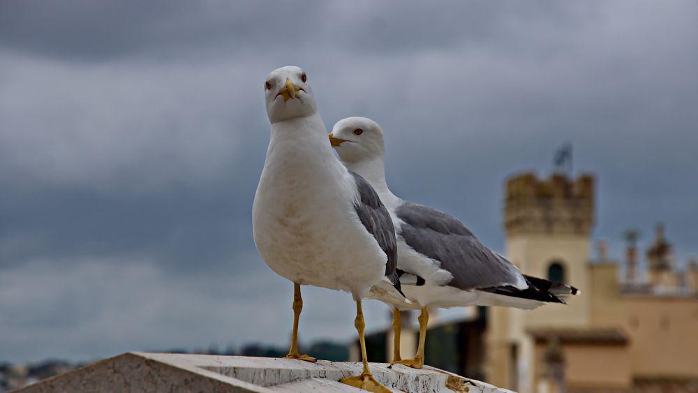 Photo in Animal #gaivota