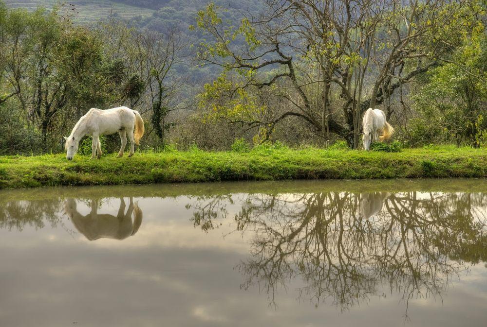 Photo in Animal #cavalos #horses