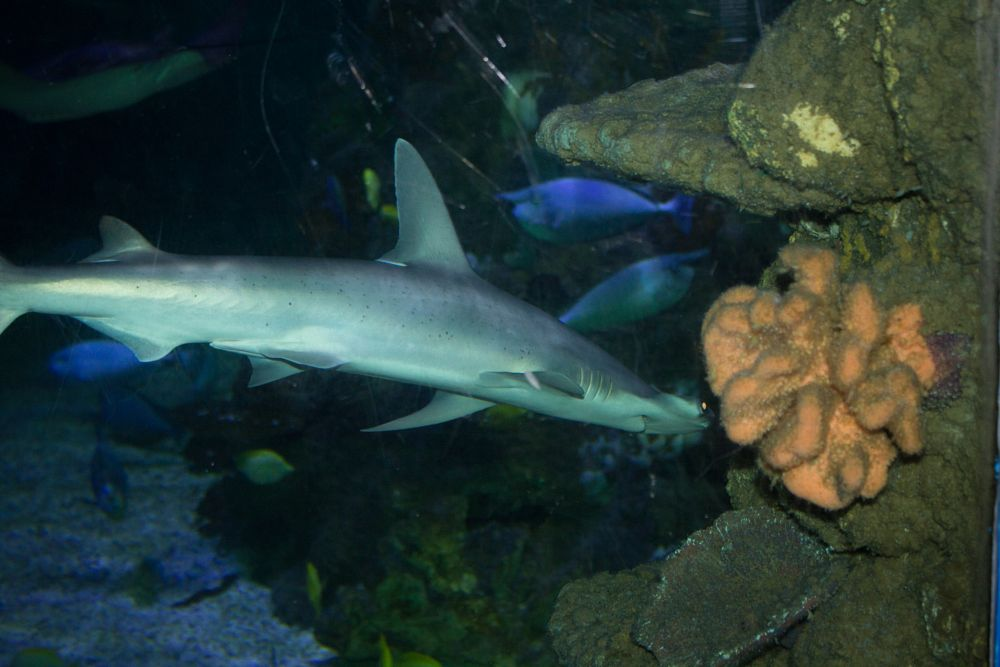 Photo in Random #shark #sea life