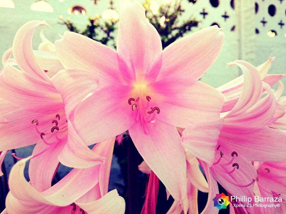 Photo in Nature #nature #flowers #niceday #xperia
