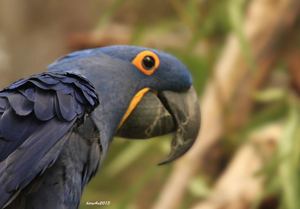 Photo in Random #bird #macaw #wild #wildlife #zoo #safari #portrait #canon #travel #photography #ypa2013 #avian