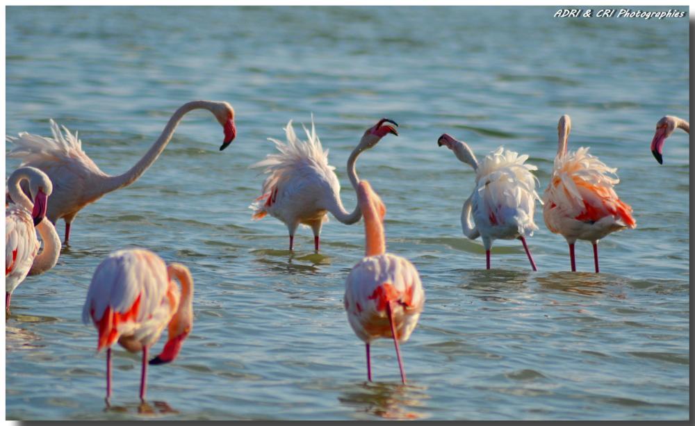 Photo in Travel #pink flamingo #camargue