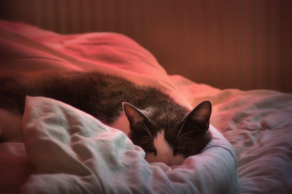 Photo in Animal #cat #animal #canterbury #kent #hidden