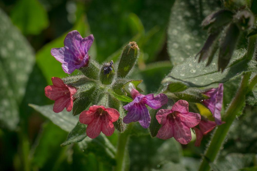 Photo in Nature #garden #flower #spring