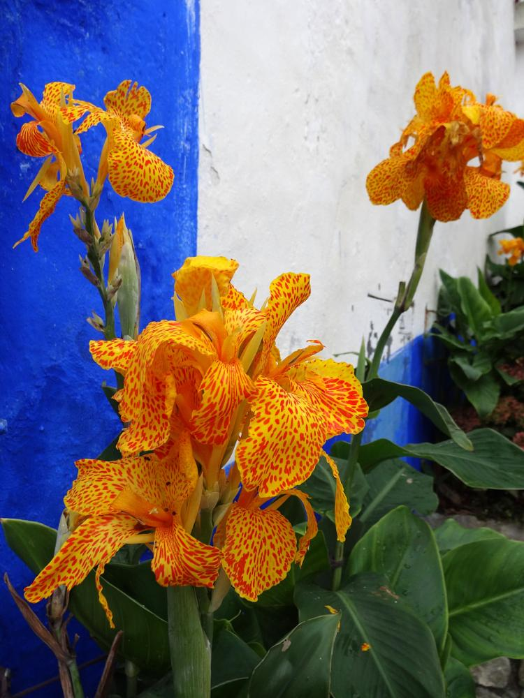 Photo in Nature #portugal #flower #color #bestof2014
