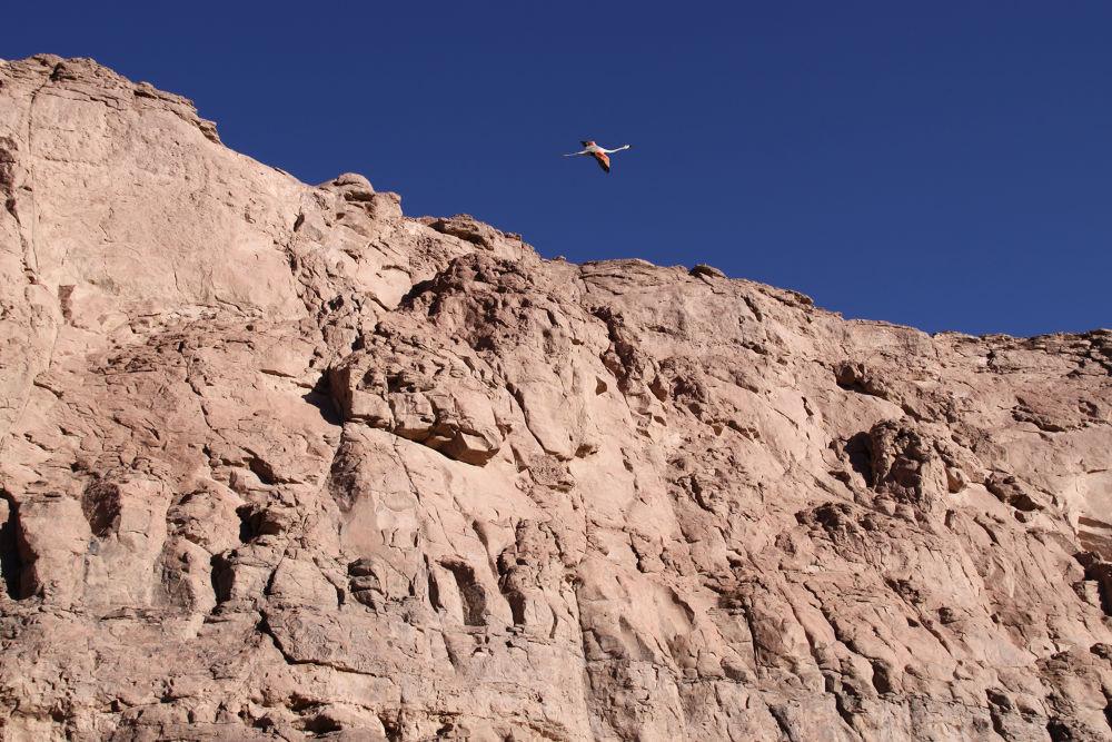 Photo in Abstract #ypa2013 #canon #anadgar #chile #antofagasta #desierto