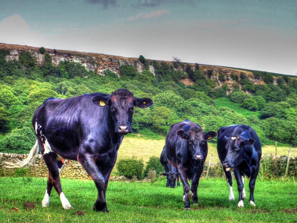 Photo in Random #landscape #animals #hdr #yorkshire