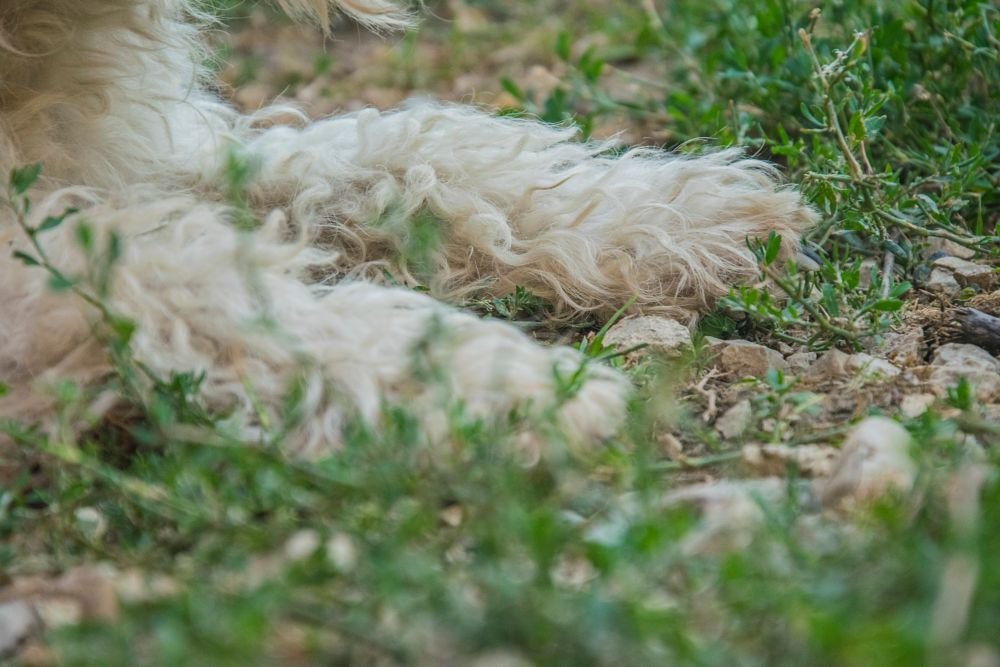Photo in Animal #wire #fox #terrier #hungary #nikon #d5300