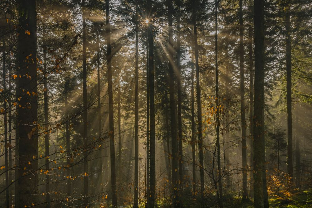 Photo in Nature #nikon #d5300 #germany #forest