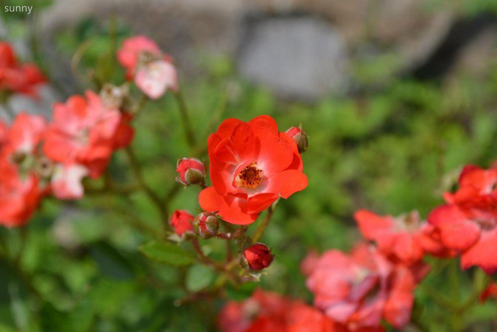 Photo in Random #flower #random