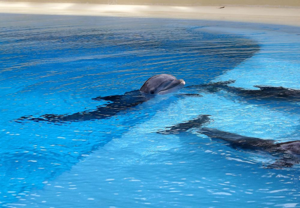 Photo in Animal #dolphin