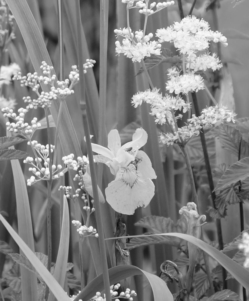 Photo in Nature #wild flowers #marshland #nature