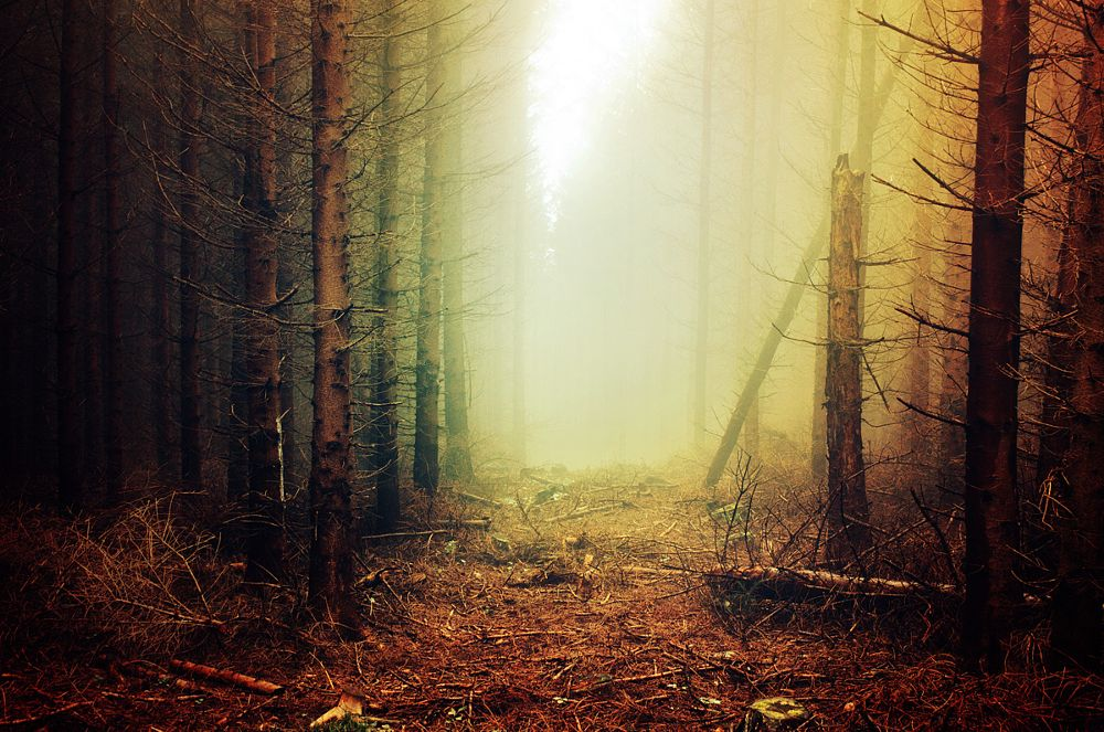 Photo in Landscape #forest #trees #fog #mist