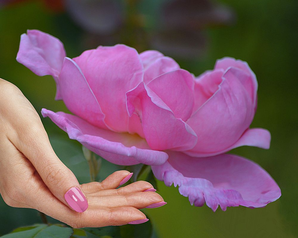 Photo in Nature #pink #flower #beauty #bokeh #hand #female #nailpolish #pinky