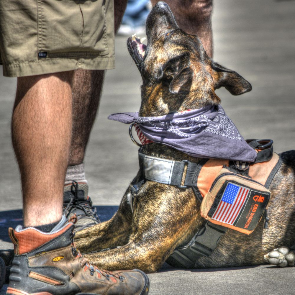 Photo in Animal #dog #trained #service #disabled #special #wonderful #awesome #canine