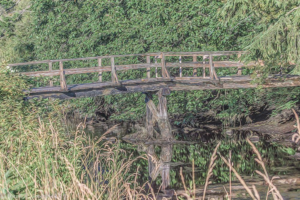 Photo in Landscape #water #creek bridge #foot bridge #trees #grass #duck