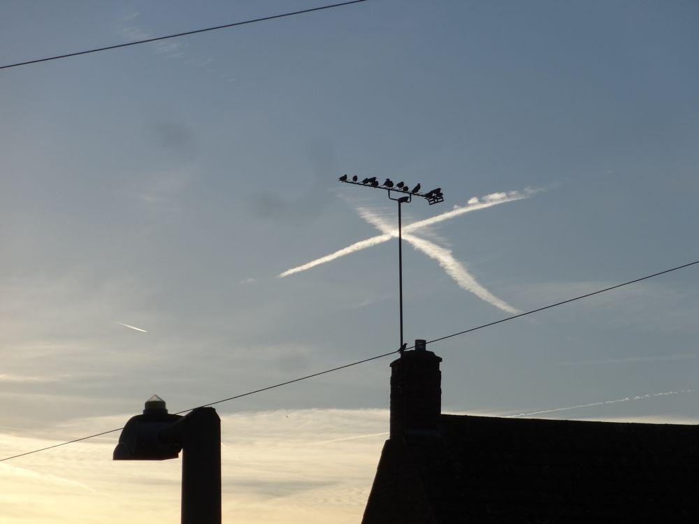 Photo in Animal #birds #sky #autumn