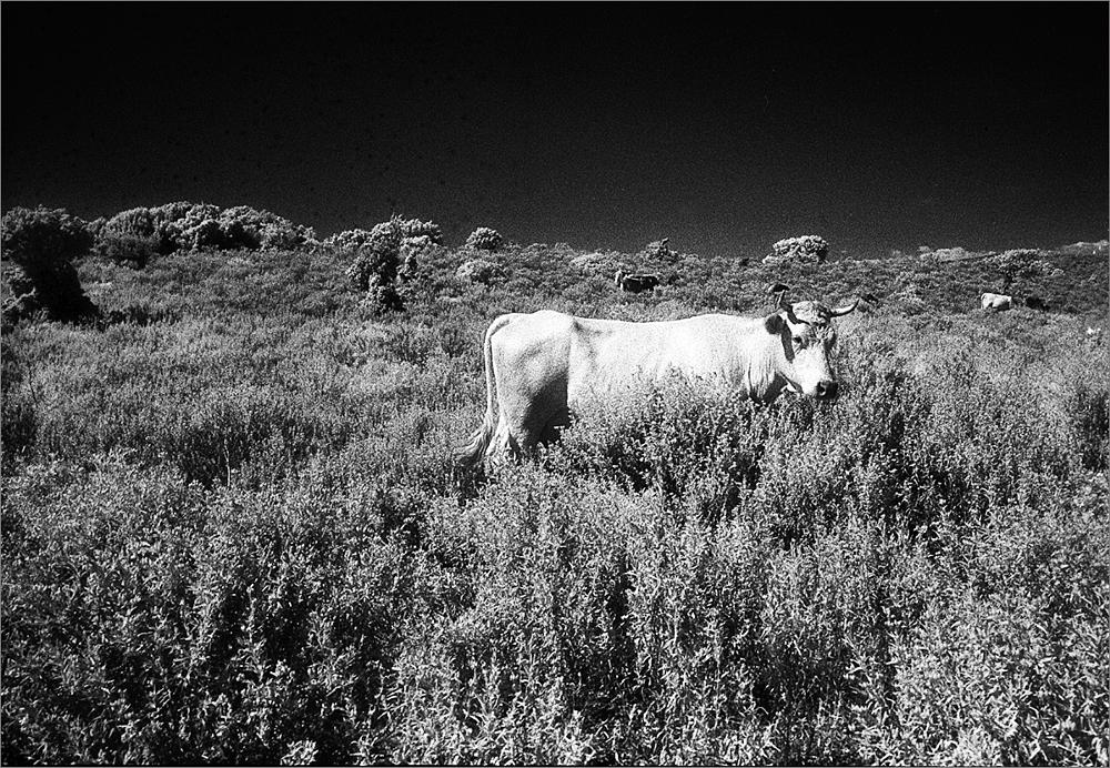 Photo in Black and White #infrared
