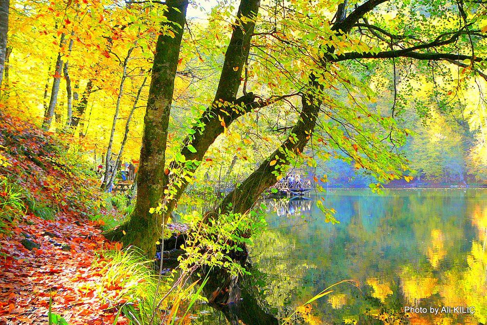Photo in Nature #bolu yedigöller nature park