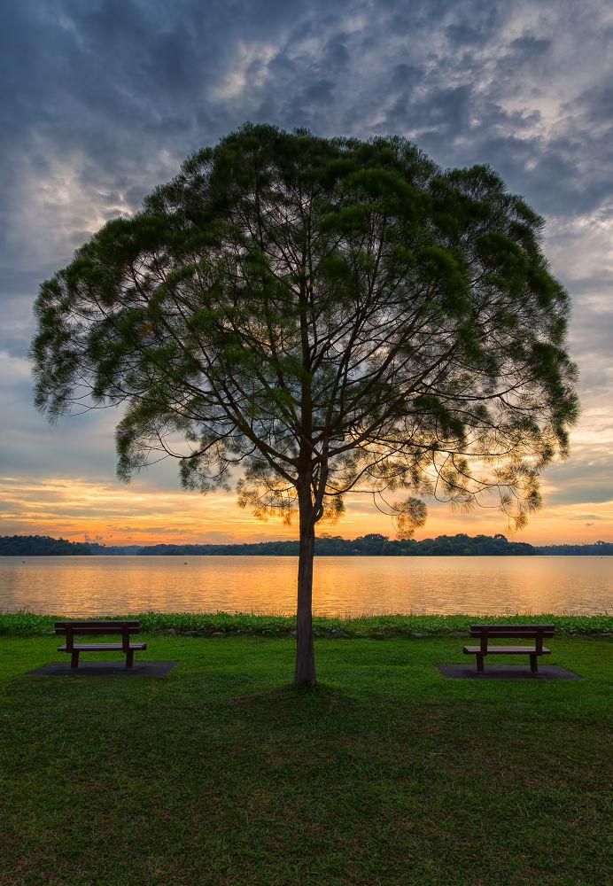 Photo in Nature #ypa2013 #singapore #park #tree #sunset #dusk #reservoir #lower pierce