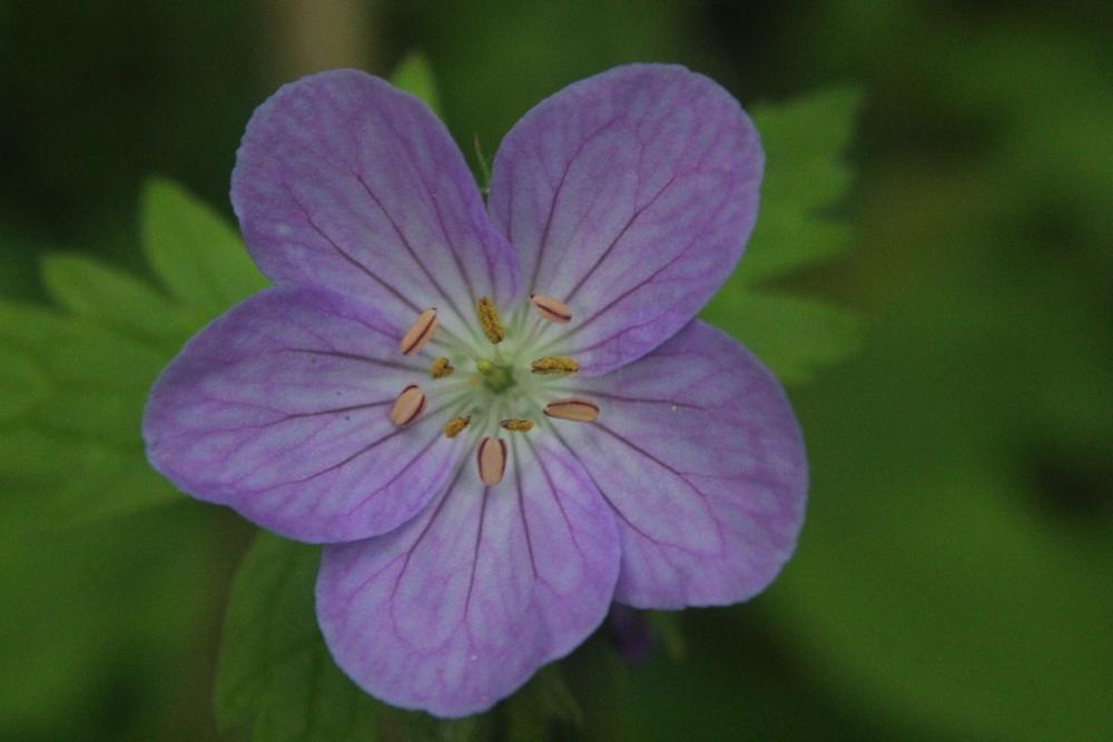 Photo in Random #macro #flower