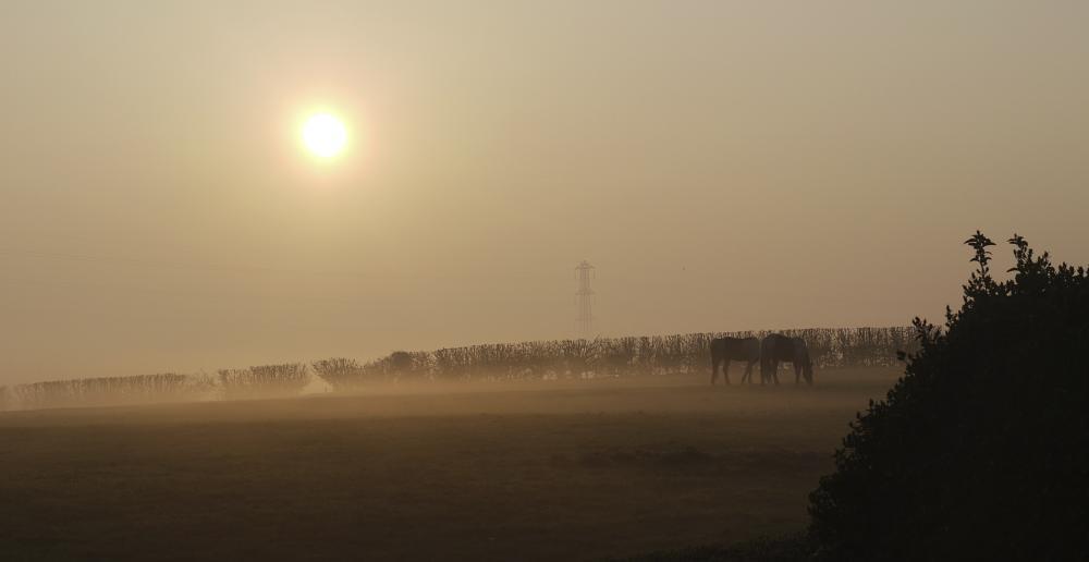 Photo in Animal #nature #sunrise #horses