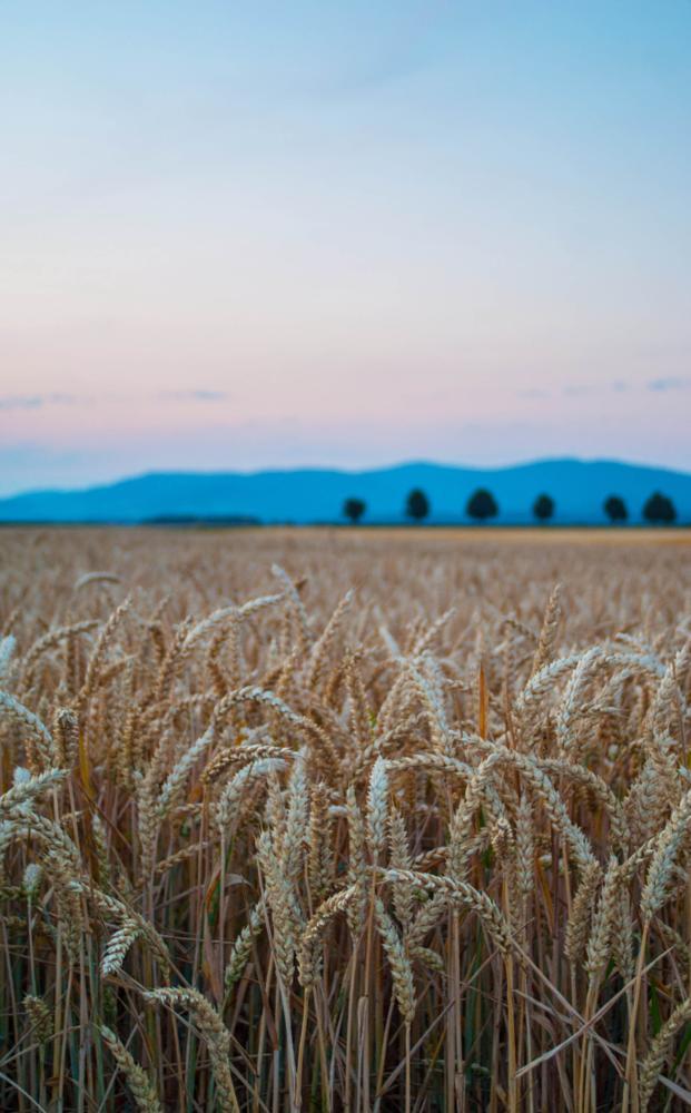 Photo in Random #bayern #fields #sunset #landscape #harvest #dslr-a100 #tokina_lens