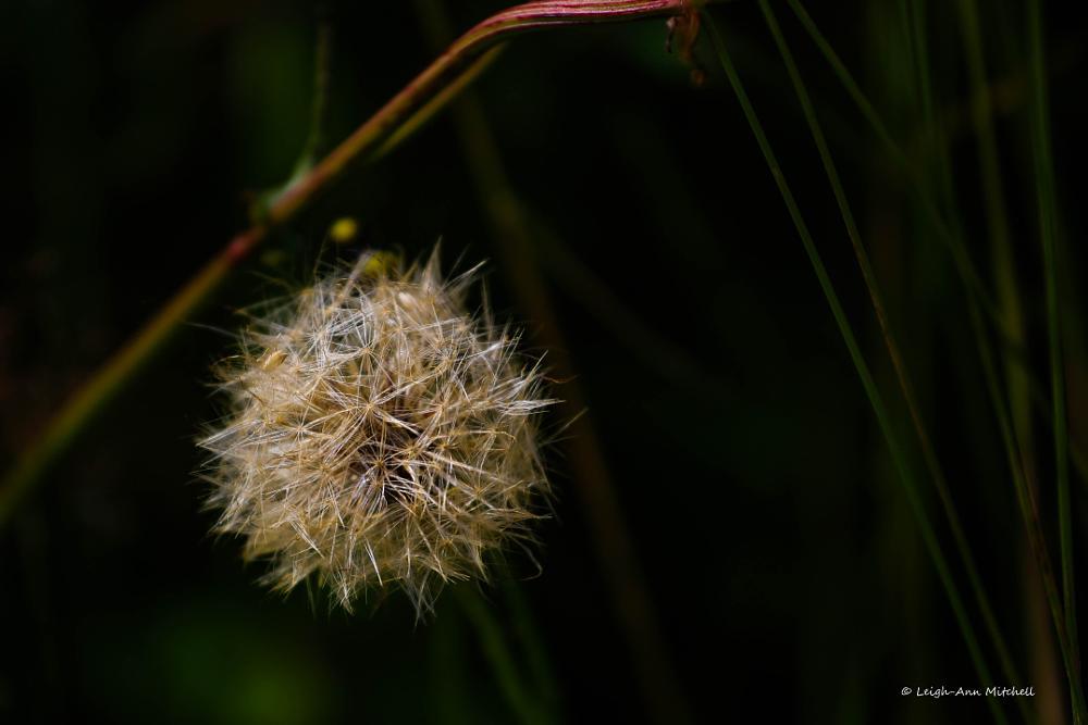 Photo in Nature #flower #wildflower #nature #garden