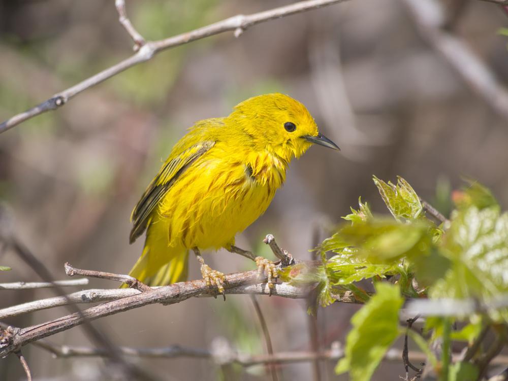 Photo in Animal #warbler #bird #nature