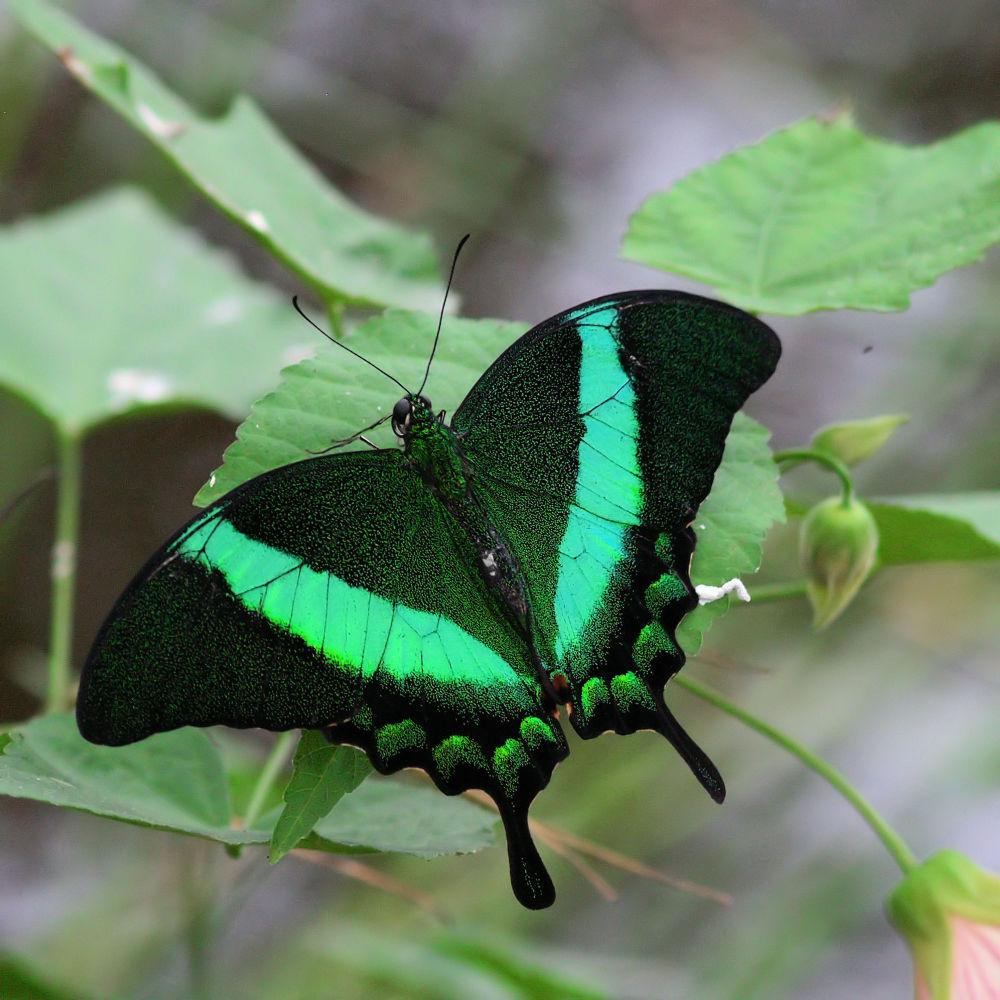 Photo in Macro #vlinder #vlindertuin #luttelgeest #butterfly #orchideenhoeve