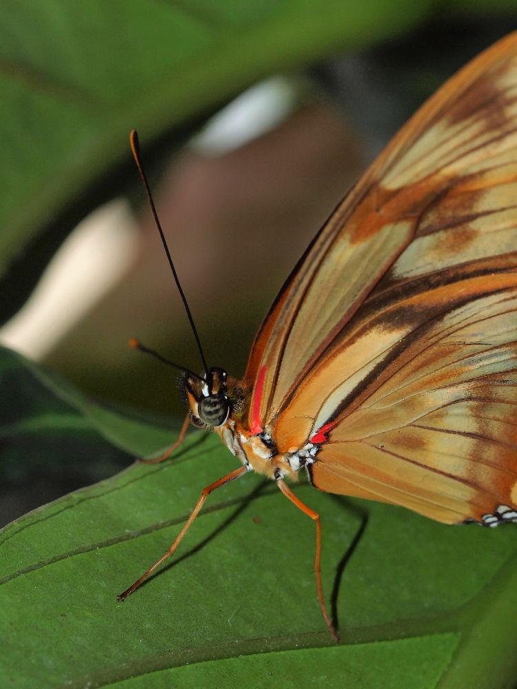 Photo in Random #butterfly #butterflygarden #vlinder #vlindertuin #emmen #dierentuin