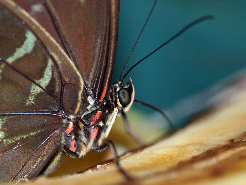 Photo in Macro #emmen #dierentuin #macro #close-up #vlindertuin #vlinder #butterfly
