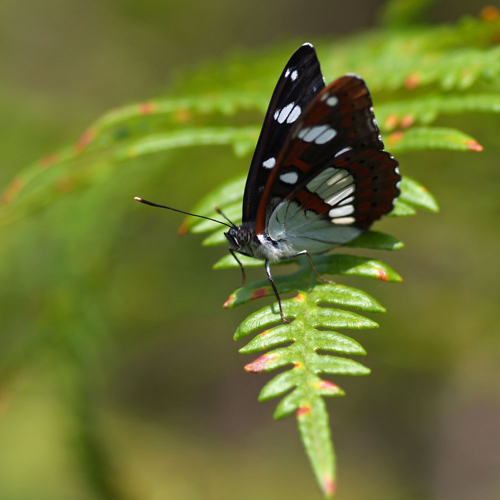 Photo in Macro #butterfly #vlinder #spain #costa-brava