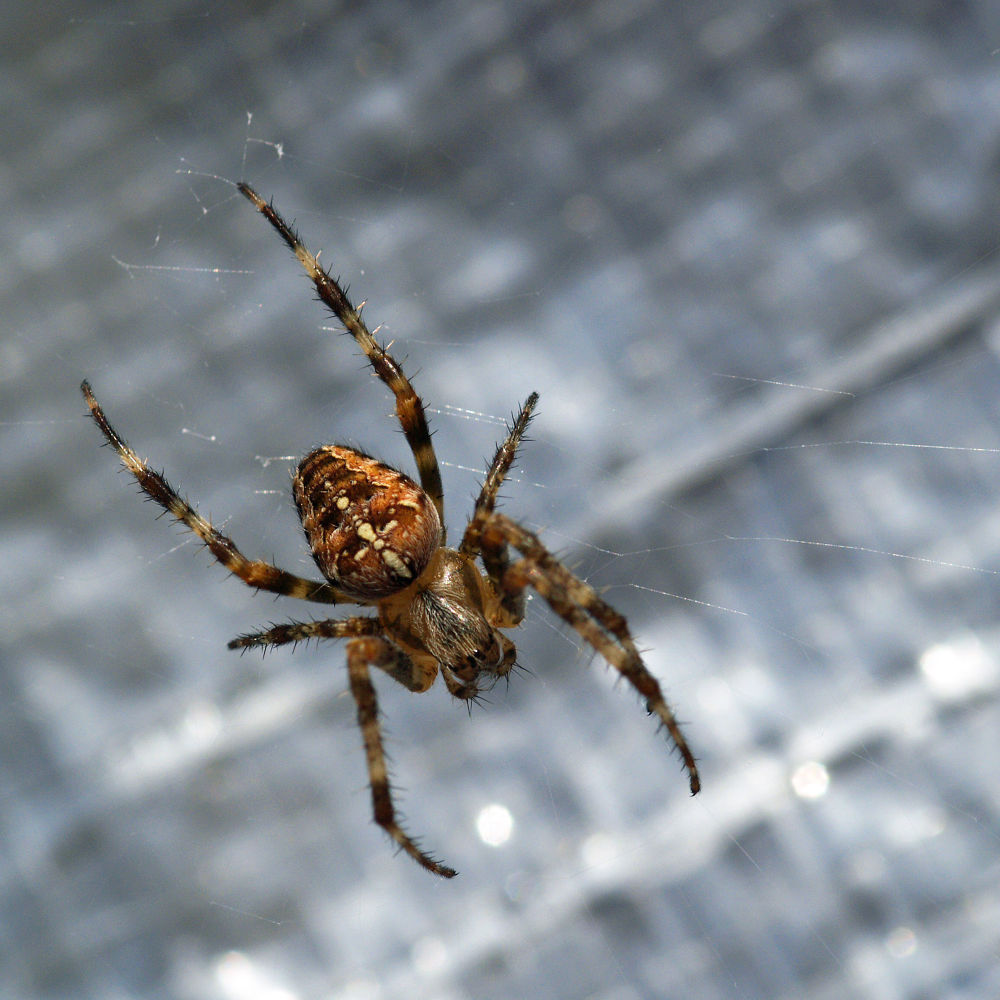 Photo in Macro #spin #spider #insect #close-up #macro